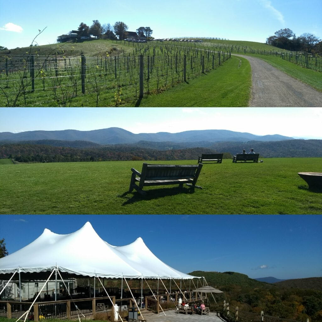 Views of the hill with vines, benches and a white tent